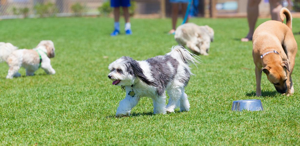 天然芝のドッグランで遊ぶ犬