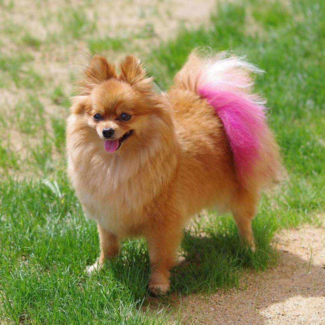 看板犬ロコちゃんです。 広いドッグランで気持ち良さそうに走り回っていました😊 今日の長生村は真夏日になるかもしれません。 歩いてすぐの場所に一松海岸があるので、ワンちゃんと一緒に砂浜をお散歩するのも気持ち良さそうですね😊