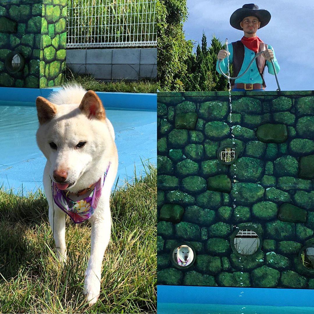 今朝は台風の影響で強い雨が降りましたがお昼からは晴れてくれました☀️ 暑い日が続いていますので水分補給を忘れずに過ごしましょう! 遊びに来てくれたモコちゃんはプールに興味津々。 穴から可愛い顔を出してくれました😍 #ウィズペットイン #ペットと泊まれる宿 #ドッグラン #長生村