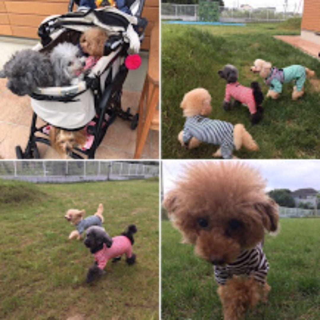 本日も風が強く9月は天気がなかなか落ち着きませんね。千葉の停電が早く全面復旧してくれることを願っています。 今回は8頭で遊びに来てくれたハッピー犬屋敷さんのラブママさんのわんこたちのご紹介です。@lovemom_happy_iny ハッピー犬屋敷さんは、保護犬と新しい家族を繋ぐ活動をしている方々です。ご興味のある方は是非HPをご覧くださいね。 https://inuyasiki.com/ 写真撮影にご協力頂きありがとうございました!また遊びにきてくださいね!  #保護犬 #ハッピー犬屋敷 #犬は家族 #わんことお出かけ #犬とお出かけ #わんこと一緒 #犬と一緒 #犬連れ旅行 #いぬのいる生活 #わんこのいる生活 #犬との暮らし #犬と暮らす #犬との暮らし #愛犬との暮らし #今日のわんこ #犬のいる暮らし #いぬすたぐらむ #犬と泊まれる宿 #わんこと泊まれる宿 #ペットと泊まれる宿 #ペットとお出かけ #ペットと旅行 #犬と旅行 #ドッグラン