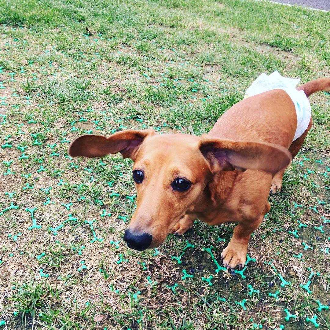 ご宿泊のお客様のご愛犬のご紹介です😊 今月何度も遊びに来てくれたリックくんです。雨も多くなかなかドッグランで遊ぶことはできませんでしたが、可愛い姿をいっぱい見せてくれました!また遊びに来てくださいね🐶 写真撮影のご協力ありがとうございました!  #犬は家族 #わんことお出かけ #犬とお出かけ #わんこと一緒 #犬と一緒 #犬連れ旅行 #いぬのいる生活 #わんこのいる生活 #犬との暮らし #犬と暮らす #犬との暮らし #愛犬との暮らし #今日のわんこ #犬のいる暮らし #いぬすたぐらむ #犬とな宿 #わんこと泊まれる宿 #ペットと泊まれる宿 #ペットとお出かけ #ペットと旅行 #犬と旅行 #ドッグラン #ウィズペットイン