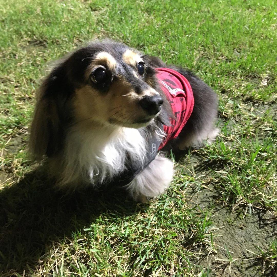 ご宿泊のお客様のご愛犬のご紹介です😊 とっても良い子に写真を撮らせてくれたティアラちゃん。 お父さんの足元で可愛くお座りしていました😀とっても仲良し家族で微笑ましかったです! 写真撮影のご協力ありがとうございました!アップが遅くなり申し訳ございません!  #犬は家族 #わんことお出かけ #犬とお出かけ #わんこと一緒 #犬と一緒 #犬連れ旅行 #いぬのいる生活 #わんこのいる生活 #犬との暮らし #犬と暮らす #犬との暮らし #愛犬との暮らし #今日のわんこ #犬のいる暮らし #いぬすたぐらむ #犬とな宿 #わんこと泊まれる宿 #ペットと泊まれる宿 #ペットとお出かけ #ペットと旅行 #犬と旅行 #ドッグラン #ウィズペットイン