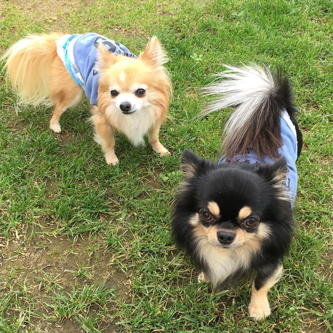 ご宿泊のお客様のご愛犬のご紹介です😊 シエルちゃんとバンビちゃん。二人でとっても楽しそうに遊んでいる姿がとても可愛らしかったです😊人見知りせず駆け寄ってきてくれたので嬉しかったです☺️ 写真撮影のご協力ありがとうございました!また遊びに来てください😊  #犬は家族 #わんことお出かけ #犬とお出かけ #わんこと一緒 #犬と一緒 #犬連れ旅行 #いぬのいる生活 #わんこのいる生活 #犬との暮らし #犬と暮らす #犬との暮らし #愛犬との暮らし #今日のわんこ #犬のいる暮らし #いぬすたぐらむ #犬とな宿 #わんこと泊まれる宿 #ペットと泊まれる宿 #ペットとお出かけ #ペットと旅行 #犬と旅行 #ドッグラン #ウィズペットイン