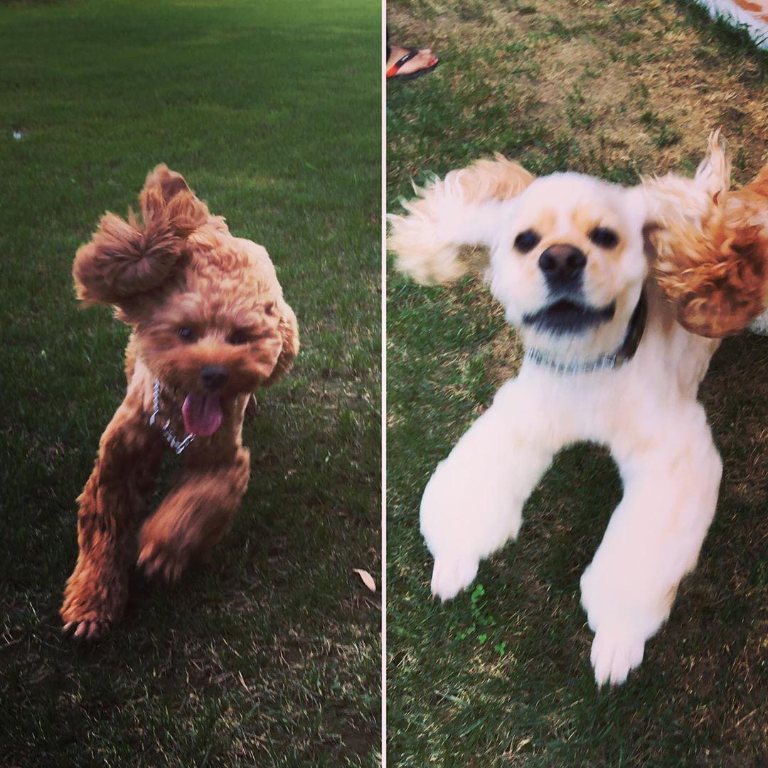 ご宿泊のお客様のご愛犬のご紹介です😊 今月も雨が多くドッグランも湿りがちでしたが、いっぱい走り回ってくれたダンクくんとパルくん。今度は晴れた日に遊べると良いね😊 写真撮影のご協力ありがとうございました! ぜひまた遊びにいらしてください(*´∀`*) #犬は家族 #わんことお出かけ #犬とお出かけ #わんこと一緒 #犬と一緒 #犬連れ旅行 #いぬのいる生活 #わんこのいる生活 #犬との暮らし #犬と暮らす #犬との暮らし #愛犬との暮らし #今日のわんこ #犬のいる暮らし #いぬすたぐらむ #犬とな宿 #わんこと泊まれる宿 #ペットと泊まれる宿 #ペットとお出かけ #ペットと旅行 #犬と旅行 #ドッグラン #ウィズペットイン
