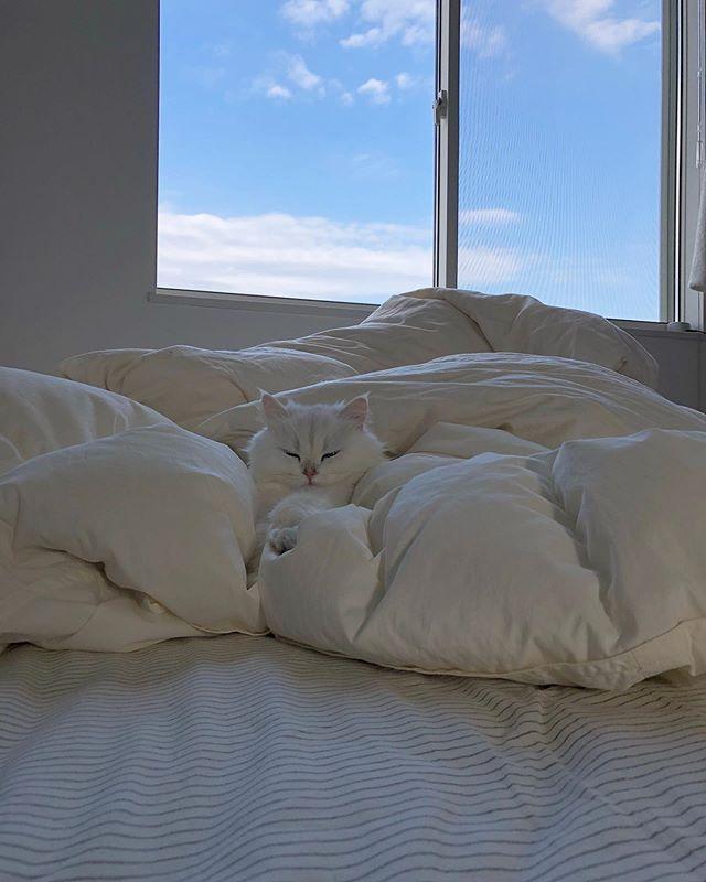 おはようございます☀️今日は少し涼しいですね🎐ウィズペットインには @iamlily_____  猫のリリーちゃんも宿泊しています🐱💗まだまだオネムだそうです😪💤 #🐶#🐱#いぬすたぐらむ#いぬのいる暮らし#ねこすたぐらむ#ねこのいる生活#いぬ#ねこ#いぬのきもち#ねこのきもち#いぬバカ部#ねこもふ団#いぬばか部#ねこばか#いぬバカ#ねこすき#ねこすきさんと繋がりたい#いぬすきさんと繋がりたい🐶#ペルシャ